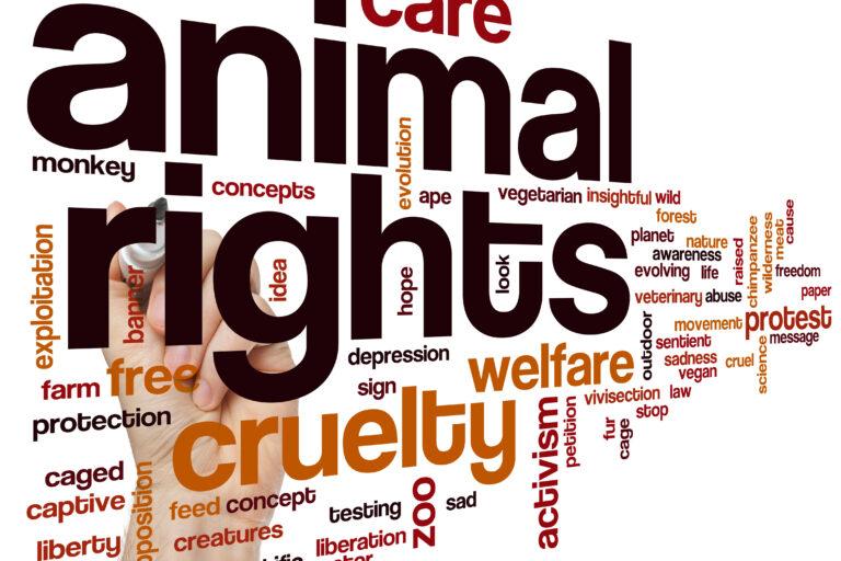 Raad van State stelt godsdienstrituelen boven dierenwelzijn?